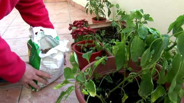 T. How to Practice Vegetable Container Gardening Promo Image
