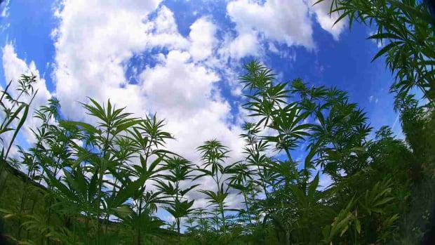 ZL. What's Marijuana Use Like Outside the United States? Promo Image