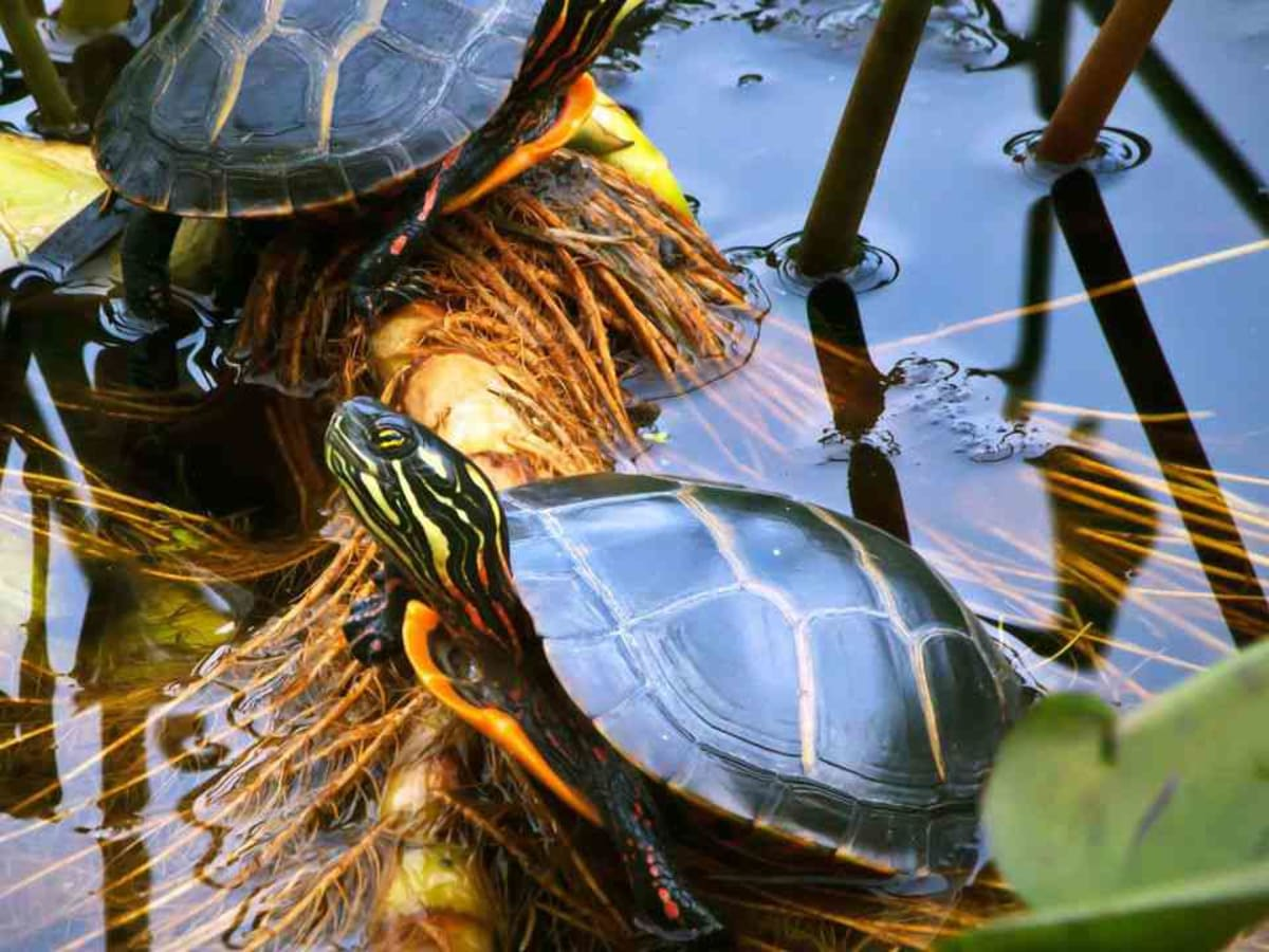 Turtle Terrarium Tips Howcast
