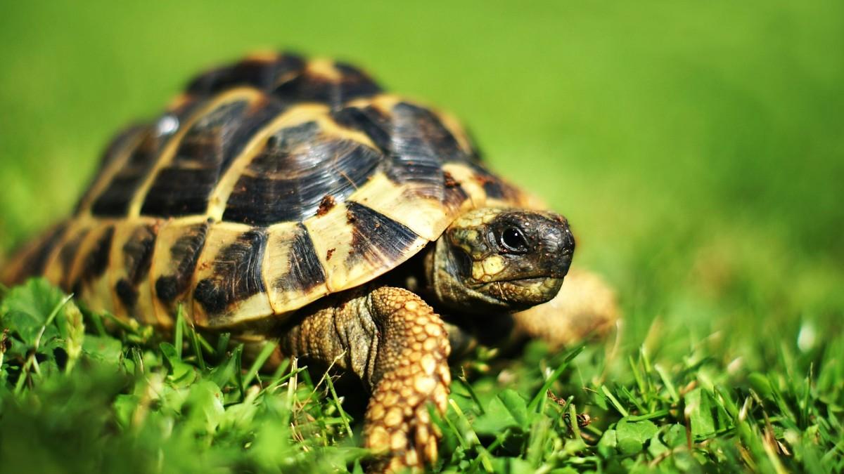 Милые черепахи картинки