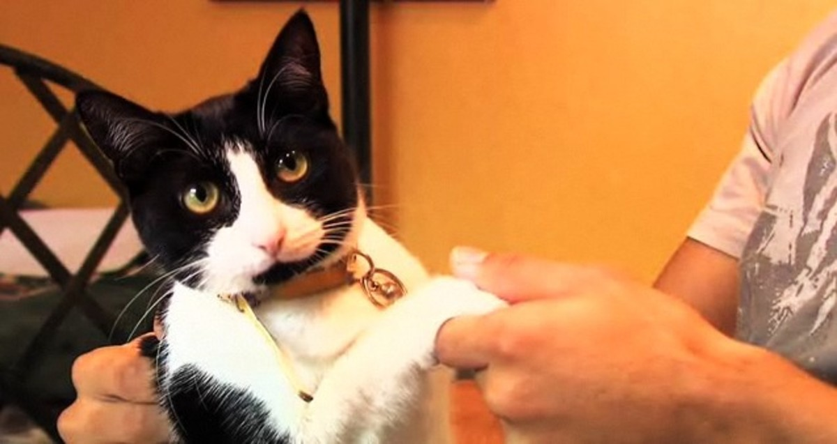 How To Clip Your Cat S Nails Howcast